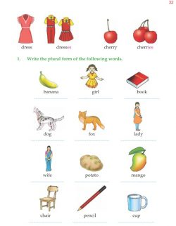 4th Grade Grammar Unit 5 Plurals - Countable and Uncountable Nouns 5.jpg