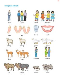 4th Grade Grammar Unit 5 Plurals - Countable and Uncountable Nouns 6.jpg