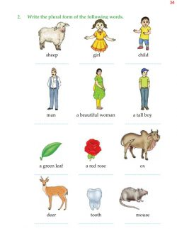 4th Grade Grammar Unit 5 Plurals - Countable and Uncountable Nouns 7.jpg